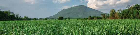 Assurance professionnelle agricole