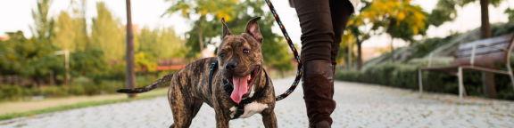 assurance RC chien