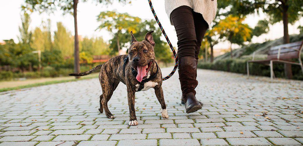 Assurance responsabilité civile de mon chien