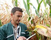Assurance agricole chiffre d'affaires