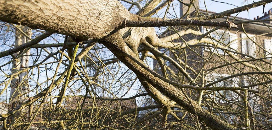 Chute d'un arbre sur une maison : qui prend en charge ?